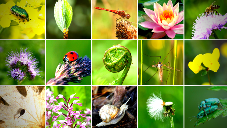 8 Ways Your Business Can Protect Our Biodiversity